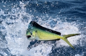 Remote Reef Fishing Charters Darwin