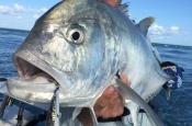thumbs_037 Sport Fishing Groote Island at Groote Eylandt Lodge