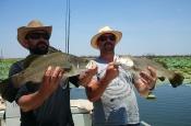 thumbs_10593213_822358574451111_6550329976056721678_n The Triple Header fishing charter